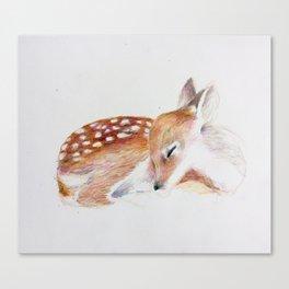 Sleeping Fawn Canvas Print