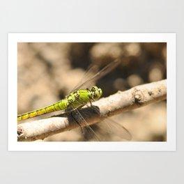 Bright Green Dragonfly 6 Art Print