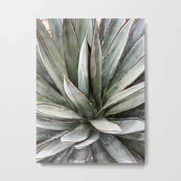 Succulents // Light Green Blue Cactus Plant Leaves Close Up Horizontal Metal Print
