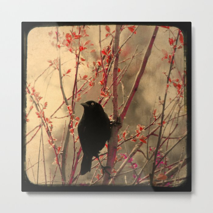 Grackle  Metal Print