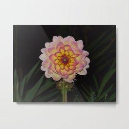 blooming pink flower Metal Print