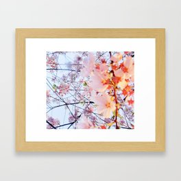 Under the Cherry Blossom - picture #3 Framed Art Print