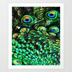 Oiled Peacock Art Print