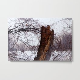 Stump in Field Metal Print
