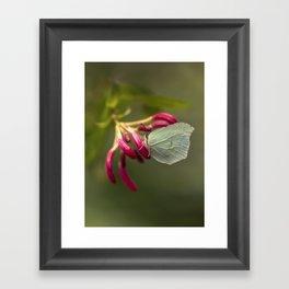 Green butterfly on pink flowers Framed Art Print