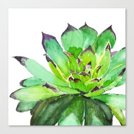 green succulent 2 Canvas Print