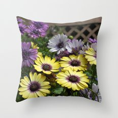 Yellow and Purple African Daisies Throw Pillow