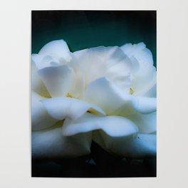 Satin White Rose Poster