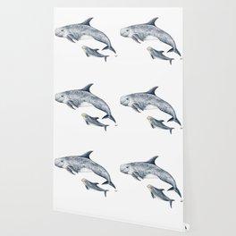 Risso´s Dolphin Wallpaper