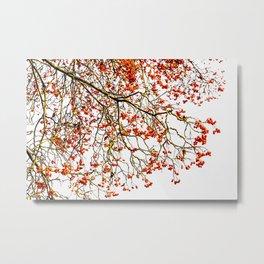 Red rowan fruits or ash berries Metal Print