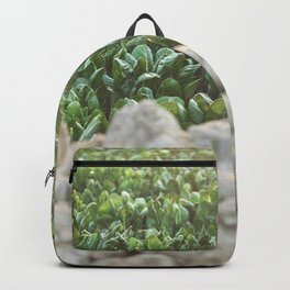 Nature photography, home furnishings, fine art, kitchen wall decor, South Italy, Sicily, Apulia, Backpack