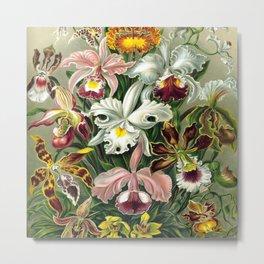 Vintage 1865 Botanical Orchids Metal Print
