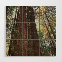 Redwood Trees Wood Wall Art