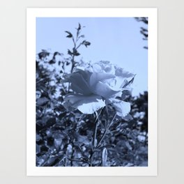 roses IX Art Print