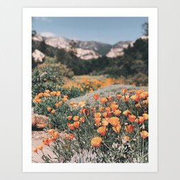 California Poppies // Santa Barbara, CA Art Print