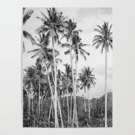 Crystal Bay Palms Poster