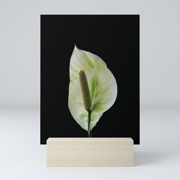 Peace Lily on Black #1 #floral #decor #art #society6 Mini Art Print