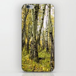 Rain-Soaked Aspen Bark iPhone Skin