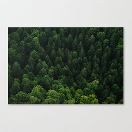 Swiss forest Canvas Print