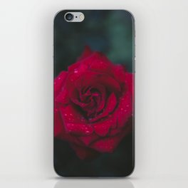 Red Rose x Dewdrops iPhone Skin