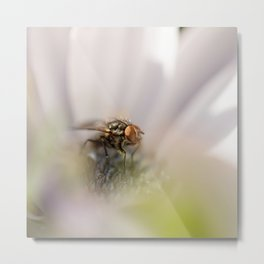 Caught in the middle... Metal Print