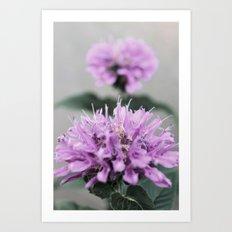 Porcupine Purple Art Print