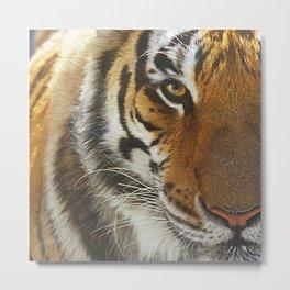 Awesome Tiger Face Macro, Close-Up Photo Metal Print