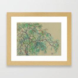 Pine-tree branch Framed Art Print
