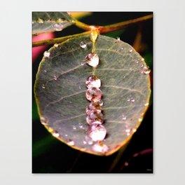 Water Drops Leaf Canvas Print