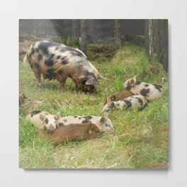 Kunekune Pigs Christmas Greeting Metal Print