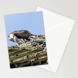 Feeding Time for Baby Ospreys Stationery Cards