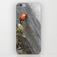 ladybug iPhone & iPod Skins featuring Ladybug by Zen and Chic