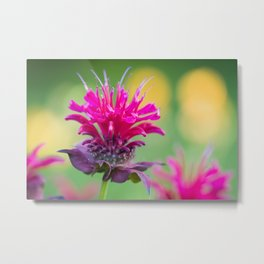 Bee Balm Blossom 4 Metal Print
