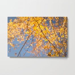 Autumn Afternoons Metal Print