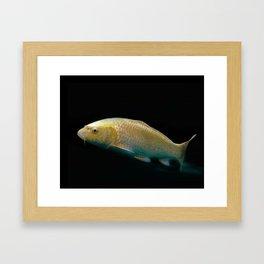 A lucky golden colored carp/Nishikigoi(Japanese Colored Carp) Framed Art Print