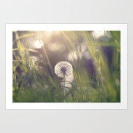Dandelion blossom defocused in garden Art Print