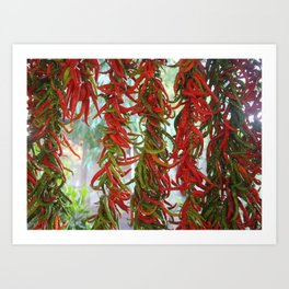 Strung and Hanging Red and Green Chili Peppers Drying Art Print
