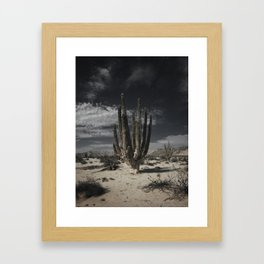 Valley of the Giants Framed Art Print