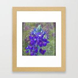 Single Bluebonnet Framed Art Print