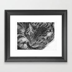 Ziggy the Tabby Cat Framed Art Print