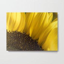Brown Disk Sunflower Macro 3 Metal Print