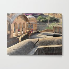 Basking in the Sun at the Monkey Temple Metal Print