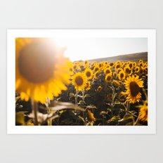 Sunflower's Season (III) Art Print