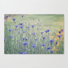 Field of Bachelor Buttons Canvas Print