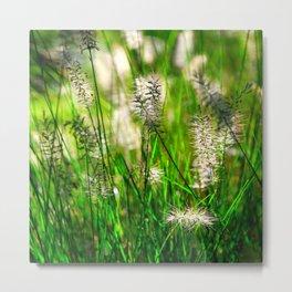 Grass (1) Metal Print
