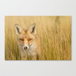 The Catcher in the Grass Canvas Print
