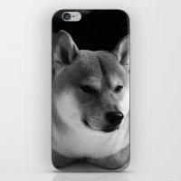 shiba inu iPhone & iPod Skins featuring Shiba Inu or Rabbit? by Fuyuki San
