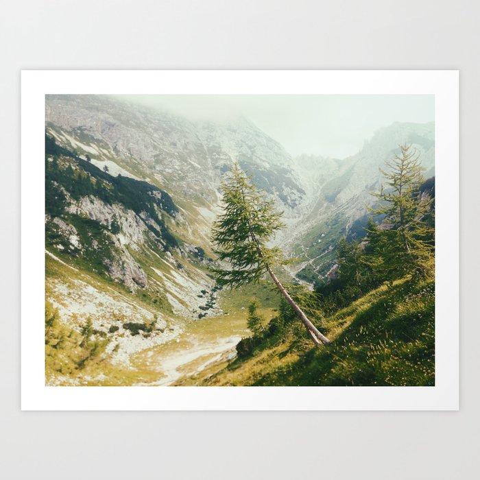 Green pine Art Print