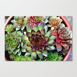 Botanics Canvas Print