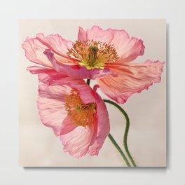 Like Light through Silk - peach / pink translucent poppy floral Metal Print
